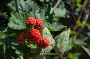 birdnetting and berries